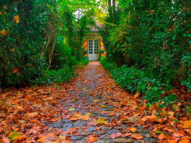 Alley_in_autumn__HDR__garden_Wallpaper_2mbfu