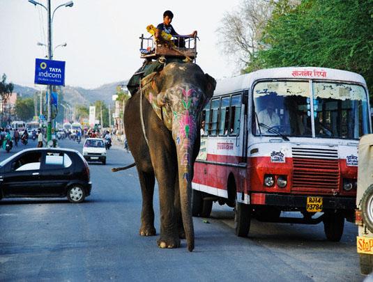 Elephant in Street of Jaipur