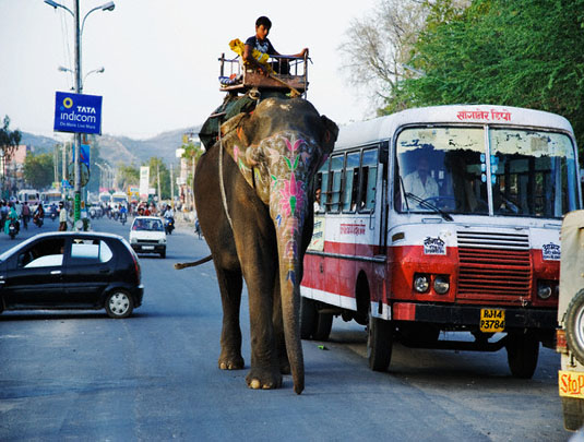Elephant in Street of Jaipur