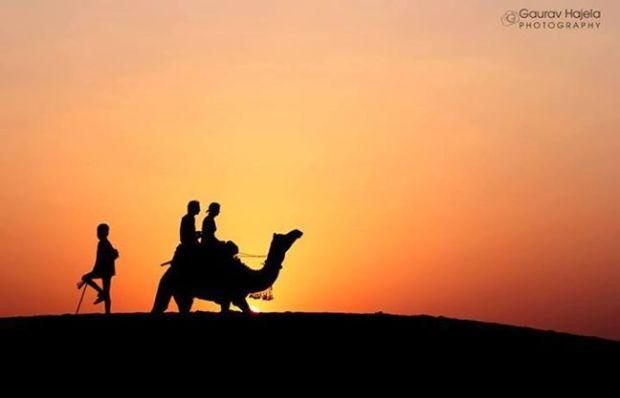 camel safari 1