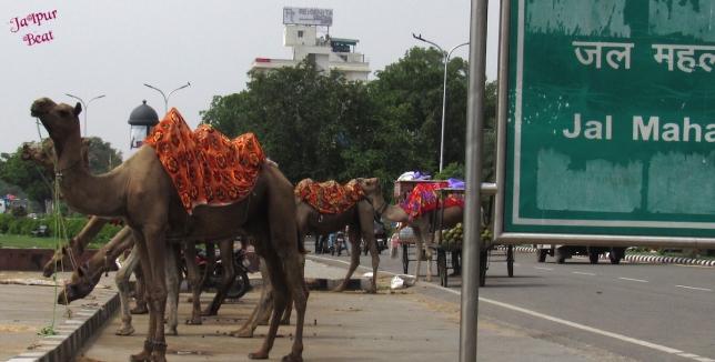 Camel copy