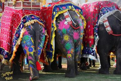 elephants-copy1