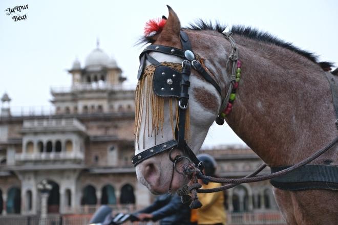 horse_albert hall