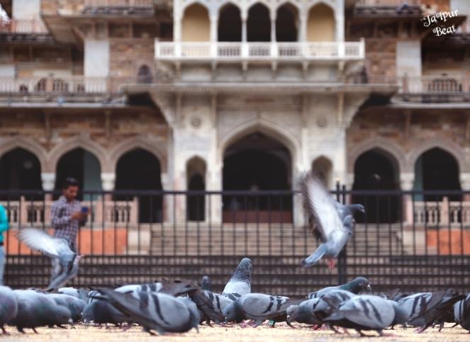 pigeons_albert hall