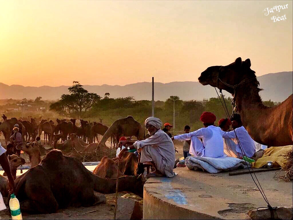 PushkarFair